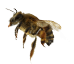 Bees | Bee Removal Long Island | New York