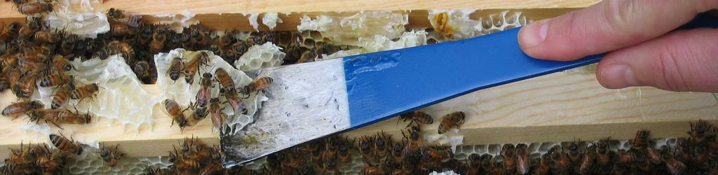 Bee Removal in Long Island