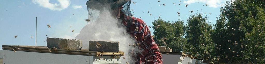 Honey Bee Removal in Long Island